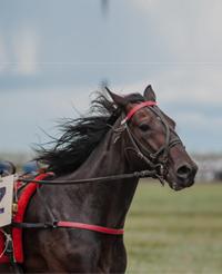 vertical-horse