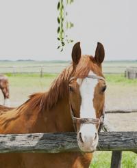 vertical-horse1